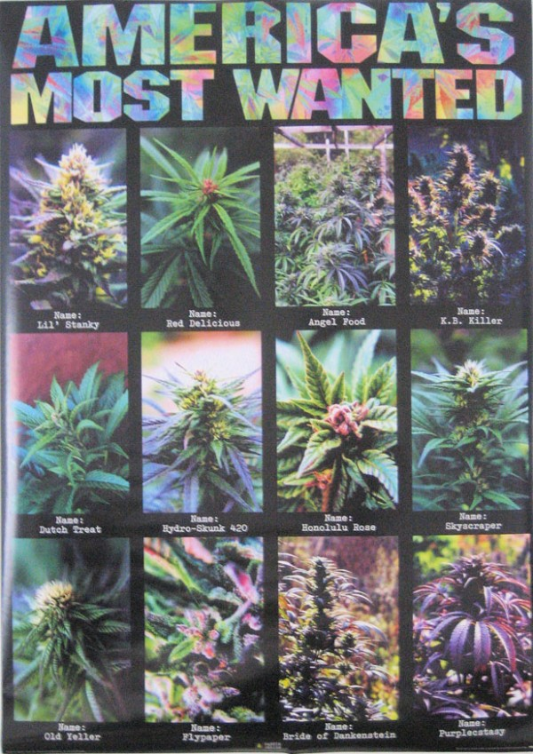 Cannabis America's Most Wanted  Poster