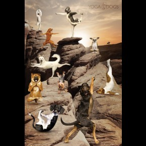 Yoga Dogs (Grand Canyon) Poster