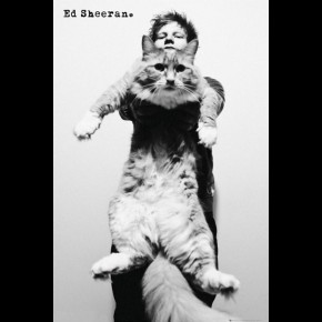 Ed Sheeran (Cat) Poster